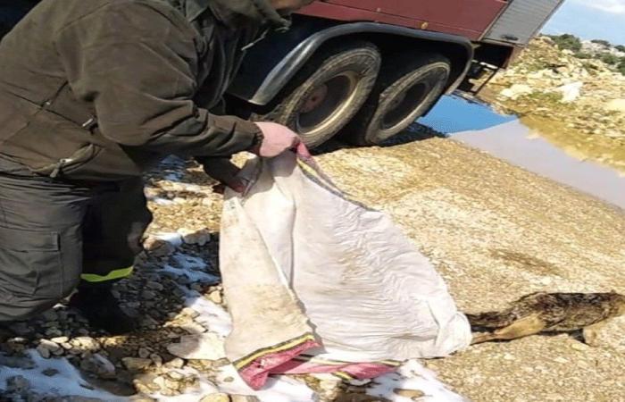 إنقاذ حيواني ابن آوى علقا في سد عكار العتيقة