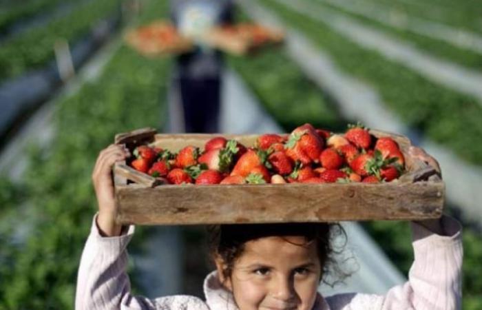 فلسطين | ينيت يأمر بوقف استيراد المنتجات الزراعية من الأراضي الفلسطينية