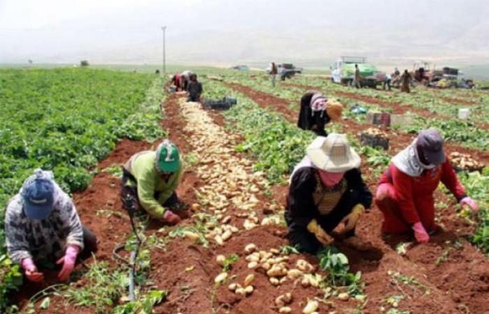 فلسطين   العسيلي: إجراءات حكومية لدعم المزارع الفلسطيني