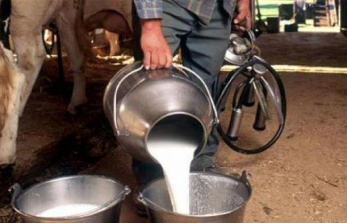 لحماية منتجي الحليب والإنتاج الوطني... قرار جديد لوزير الزراعة