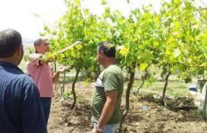 فلسطين | زراعة جنين تنظم جولة على مزارع العنب والزعتر في عجة وعرابة