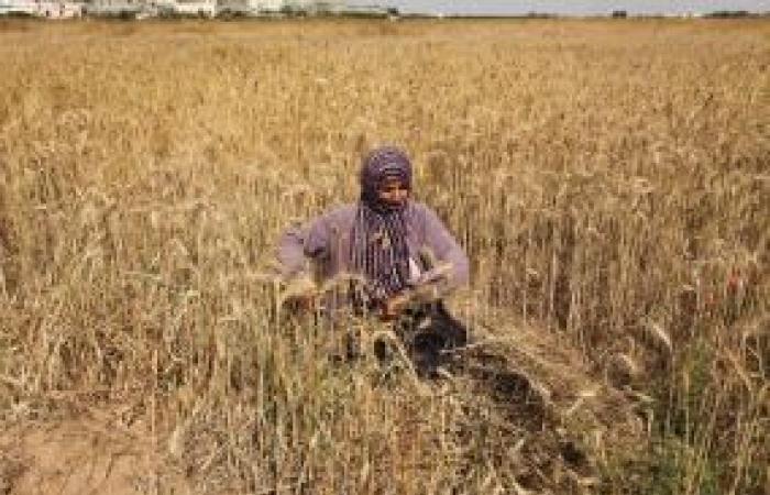 فلسطين | غزة: الاحتلال يستهدف صيادين ومزارعين ورعاة أغنام