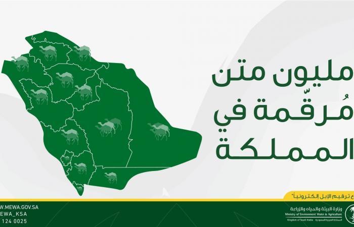 """السعودية   إتمام ترقيم مليون رأس من الإبل بالسعودية """"إلكترونياً"""""""