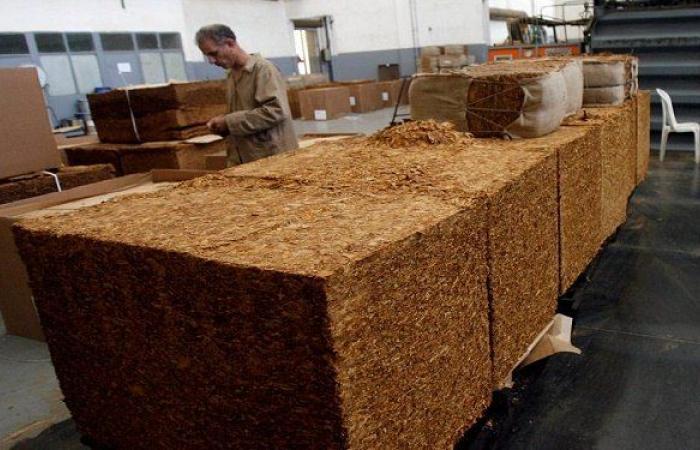 بزيادة 50% عن التسعيرة القديمة.. إدارة حصر التبغ- طرابلس تبدأ بشراء المحصول!