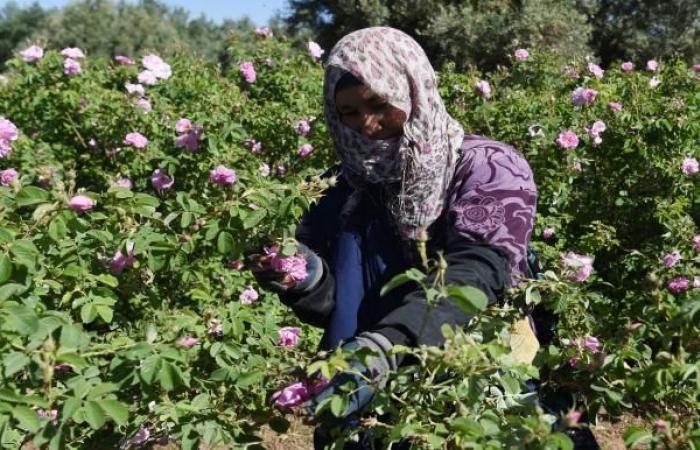 ندرة المياه تهدد منطقة زراعية شاسعة في المغرب