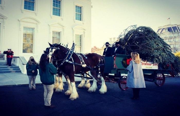 ميلانيا ترامب تستقبل شجرة العيد في البيت الأبيض (فيديو وصور)