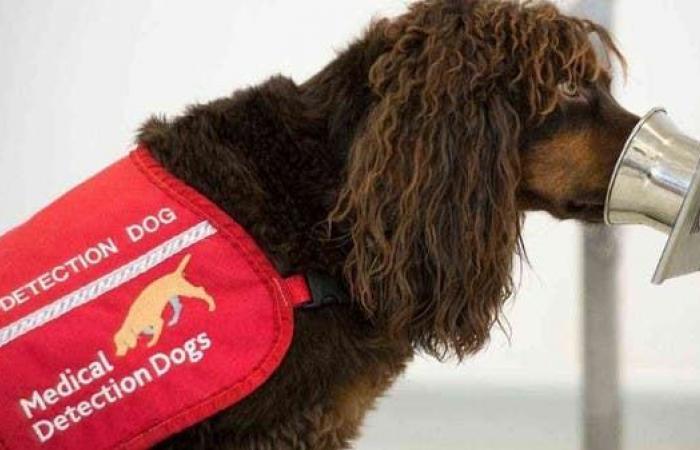 فعّالة بنسبة 94%.. كلاب ألمانية تكتشف كورونا!
