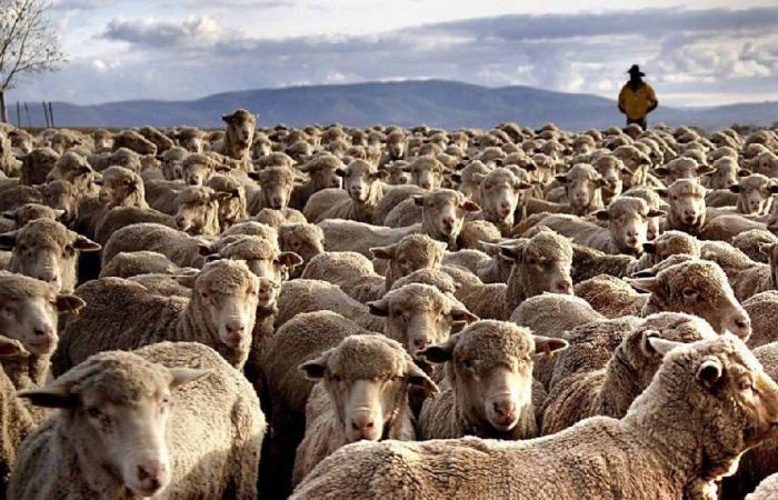 """بعد """"ترند"""" الزراعة.. تربية المواشي """"بيزنس"""" جديد يعود إلى الواجهة"""