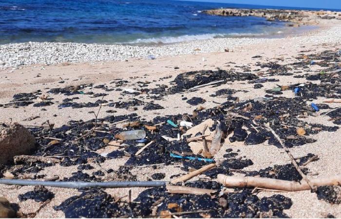 """""""السم الأسود"""" يزحف على الشواطئ اللبنانية!"""