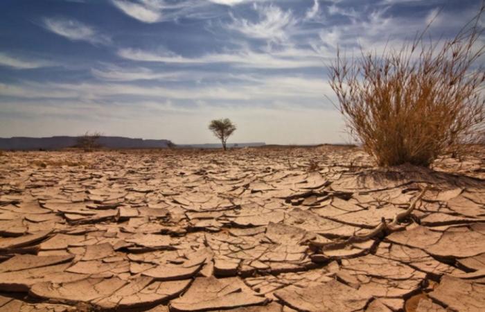 """في أوروبا.. موجات الجفاف """"الأكثر تطرفًا"""" منذ 2000 عام"""