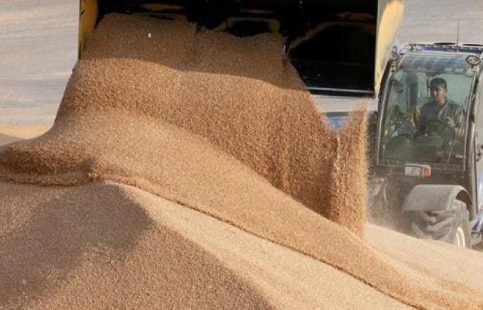 روسيا مستعدة لوقف قيود تصدير القمح حين تستقر السوق