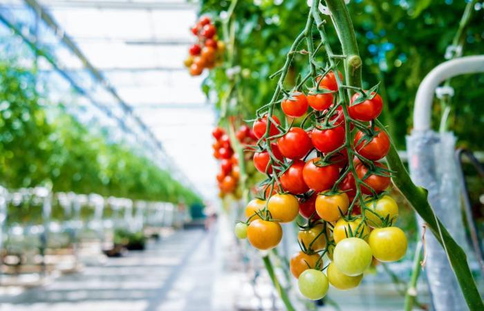 شركة ناشئة في الشرق الأوسط تزرع الطعام في الصحراء