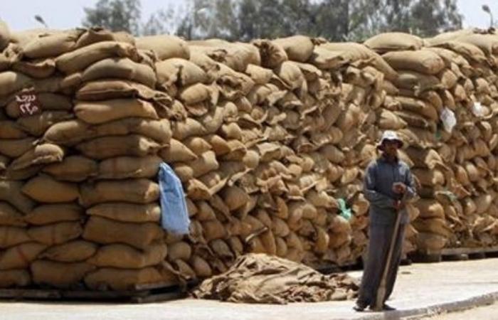 مصر تشتري 3.4 مليون طن من القمح منذ بداية موسم الحصاد المحلي
