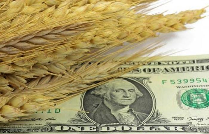مع ارتفاع تكلفة الشحن 537%... هل يواجه العالم أزمة غذاء؟