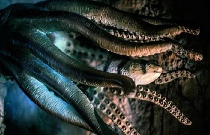 اكتشاف حيوان غريب في المحيط الهادئ!