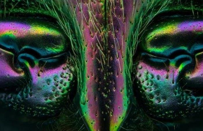 تصوير بتقنية المايكرو.. رصد وجوه خفية لمخلوقات لا تُرى بالعين المجردة
