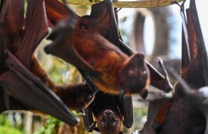 أصل كورونا ثانية.. كهف في لاوس مع خفافيشه قد يكون المنبع