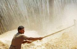 مصر تعلن عن إحتياطها الإستراتيجي من القمح.. الكمية إستثنائية