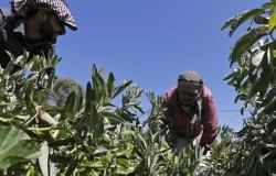 تركيا تتصدر بلدان العالم بأربعة منتجات زراعية