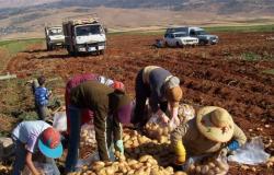 نقابة العمال الزراعيين: للكف عن قطع الطرق