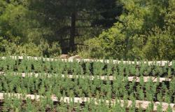 منسقية التعاونيات الزراعية في الشوف الأعلى: لحكومة منتجة تهتم بالقطاع الزراعي