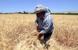 لمزارعي القمح والشعير.. بلاغ يحدد أسس تقديم الطلبات للإستفادة من الدعم
