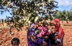 سوريا | زيتون عفرين مجددا.. خوات تركية وعمليات سلب ونهب