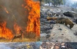 إيران | حرائق الغابات تشعل غضب الإيرانيين.. والحكومة غائبة