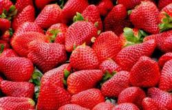 خبير تغذية يتحدث عن الخصائص المفيدة للفراولة